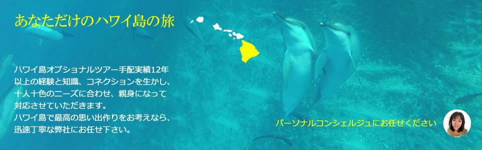 ハワイ島 オプショナルツアー ドルフィン