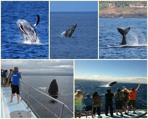 os_whale_top