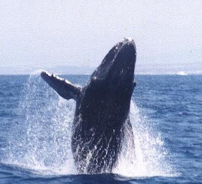 dol_whale8